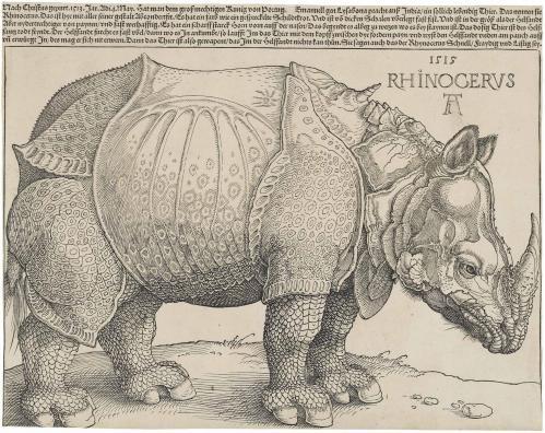 Durer s rhinoceros 1515