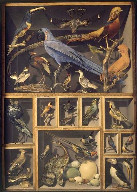 Leroy de barde alexandre isidore reunion d oiseaux etrangers places dans differentes caisses